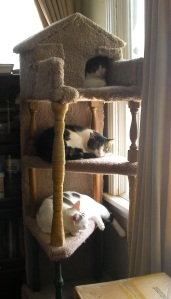 The Cats in the Tower