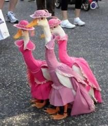 Goose Ladies