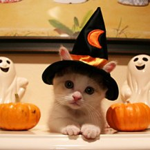 Halloween Kitty from SPCA Florida