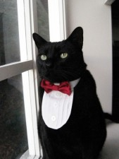 James Bond Kitty at Catster.com