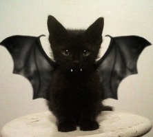 Kitty Bat