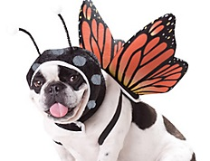 From Party City - Animal Planet Dog Costume